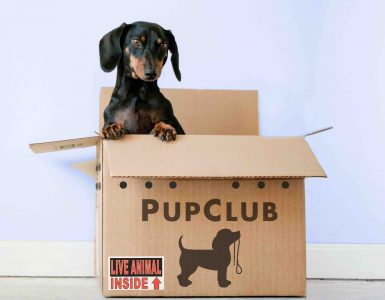 puppy peering out of subscription delivery box
