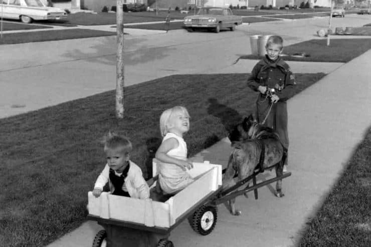Kids in wagon being pulled by harnessed dog