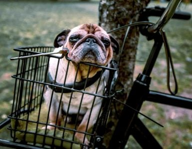 dog sits in a bike basket