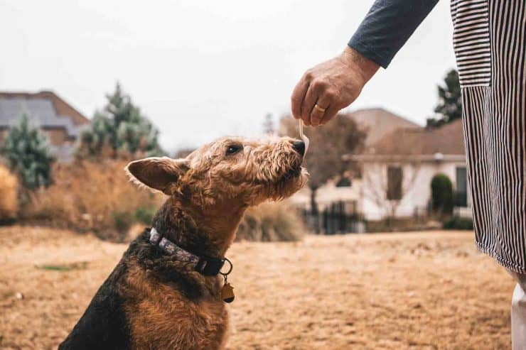 dog being handed food