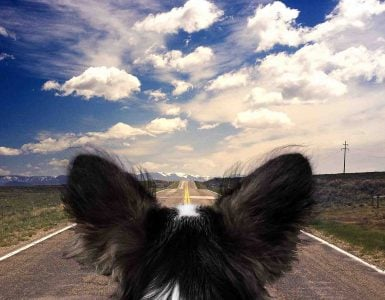 dog in car looking out on open road