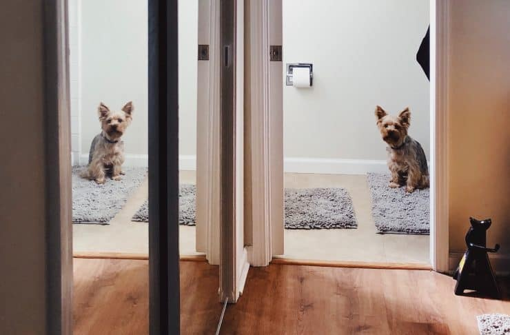 dog looks out from bathroom