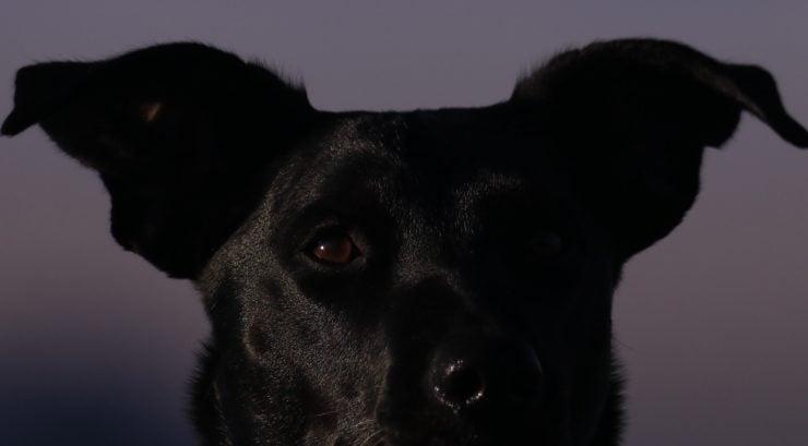 dog barking at night