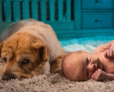 dog on floor next to baby