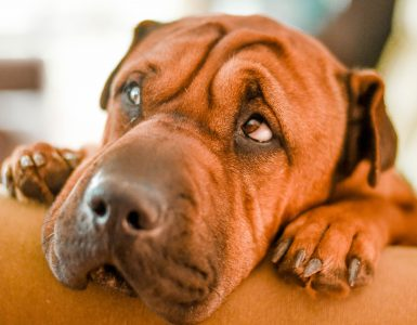 dog looking sad with upset stomach