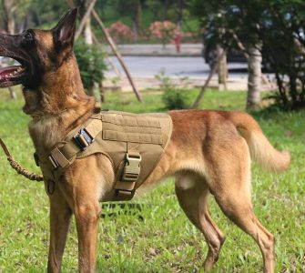 shepherd wearing tactical dog harness