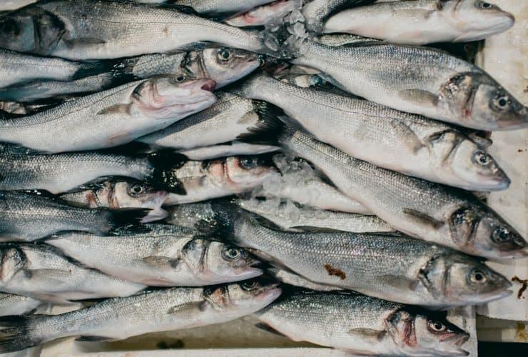 stack of fresh fish