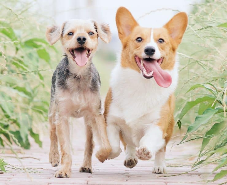 two dogs feeling pain free