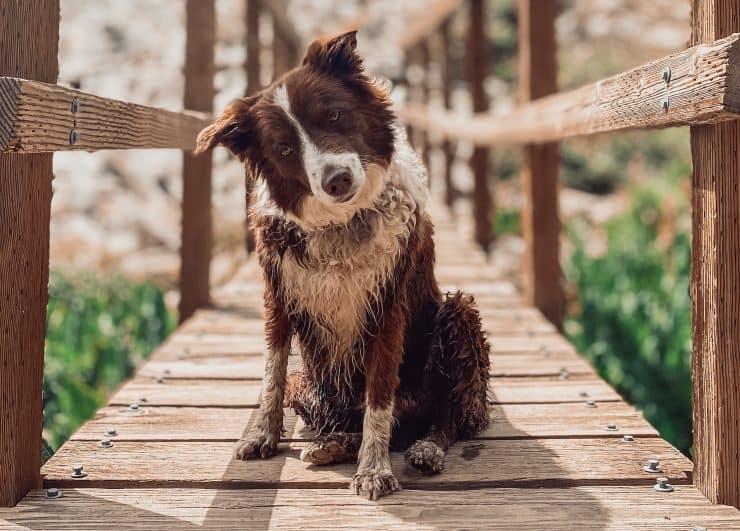 dog remembering