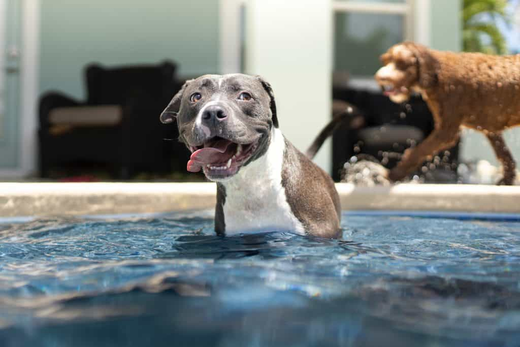 dog stands in pool