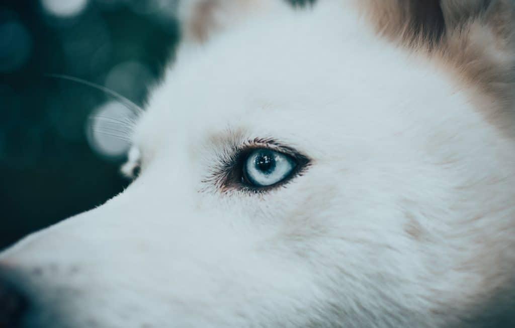 closeup of dog eyelashes