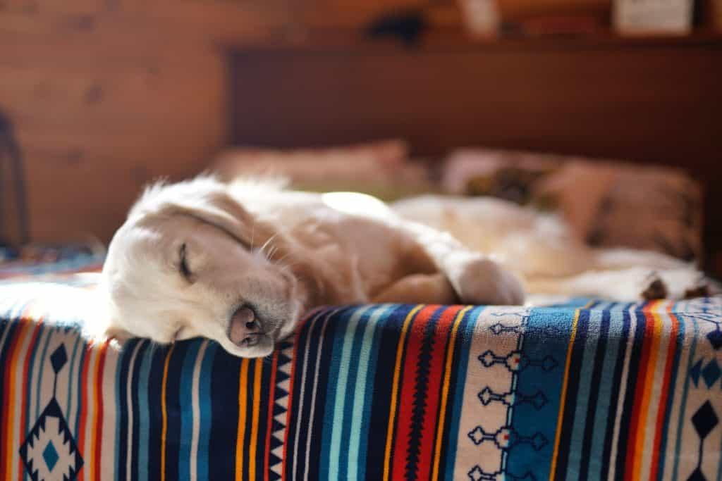 congested dog sleeping in awkward position