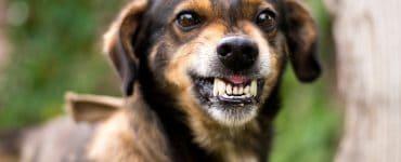 dog growls at nothing