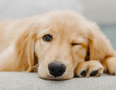 dog winking