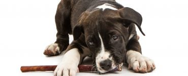 are bully sticks safe for dogs