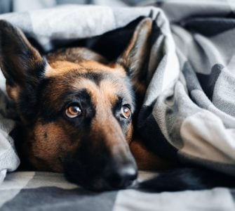 what can i give dog to sleep at night