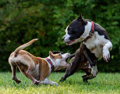 introducing new dog to jealous dog