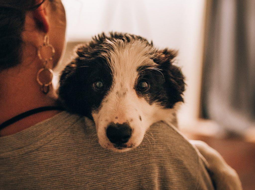 dog rehoming guilt