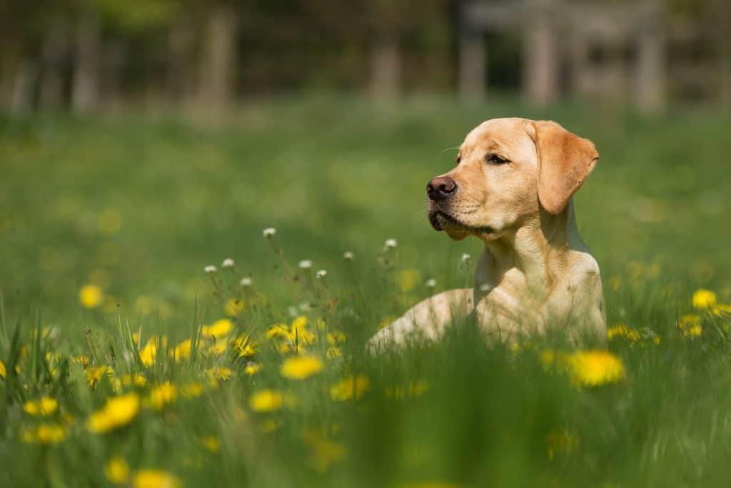 pet safe weed killers