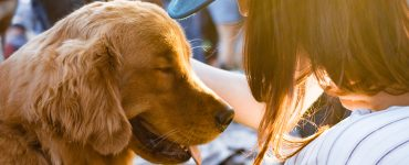 rehoming a dog guilt