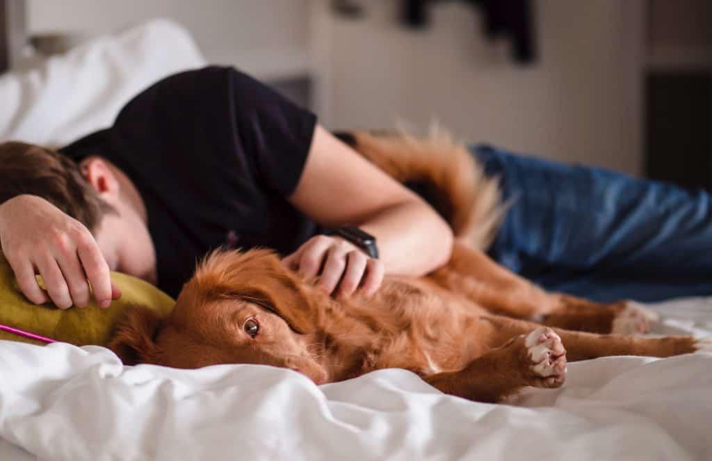 dog can't sleep at night
