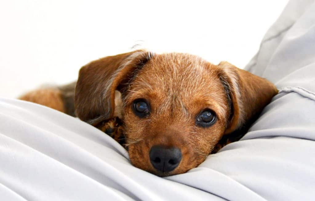 what to give dog to sleep at night