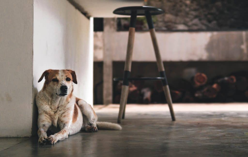 dog waiting to be rehomed