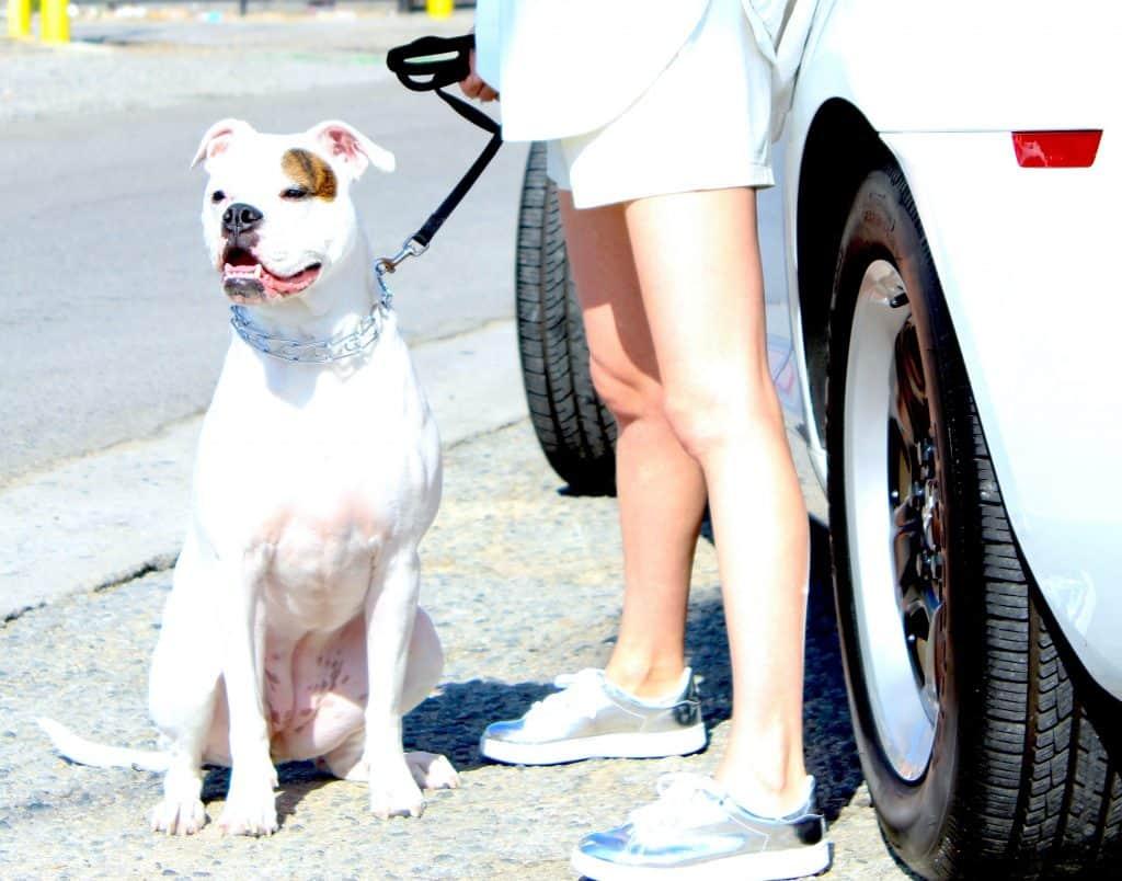 dog being surrendered